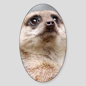 Meerkat Slider Case Sticker (Oval)