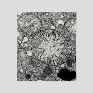 Transmission electron micrograph of  Throw Blanket