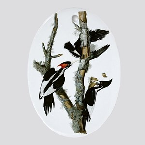 Ivory Billed Woodpeckers Oval Ornament