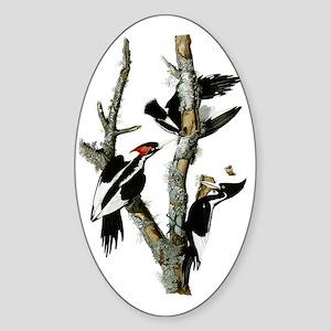 Ivory Billed Woodpeckers Sticker (Oval)