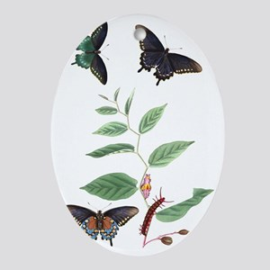Illustration of Butterfly Life Cycle Oval Ornament