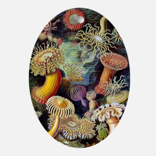 Antique 1904 Sea Anemone Nature Prin Oval Ornament