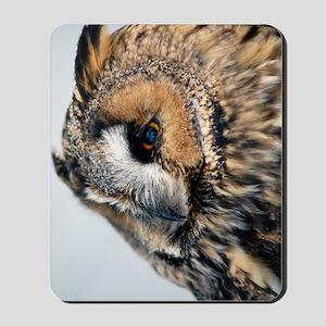 Eagle Owl Kindle Sleeve Mousepad