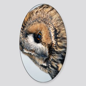 Eagle Owl Kindle Sleeve Sticker (Oval)