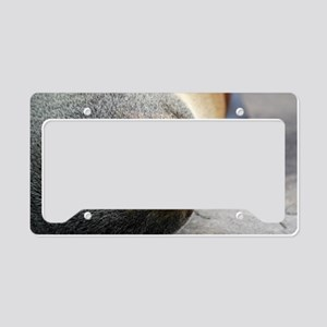 South American Fur Seal Lapto License Plate Holder