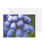 Blue Grape Hyacinth Greeting Cards (Pk of 10)