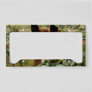 Peek-a-boo horse License Plate Holder