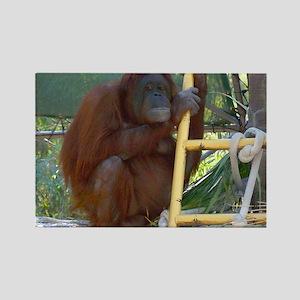 Lonely Orangutan Rectangle Magnet