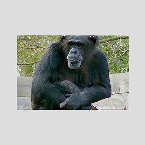 Sitting Ape Rectangle Magnet