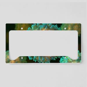 Virus, computer artwork License Plate Holder