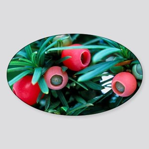 Yew tree berries Sticker (Oval)