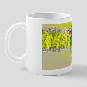 Cannabinoid receptor binding, artwork Mug