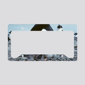 Adelie penguin with chick License Plate Holder