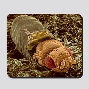 Adult fruit fly hatching, SEM Mousepad