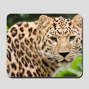 Amur leopard Mousepad