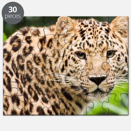 Amur leopard Puzzle