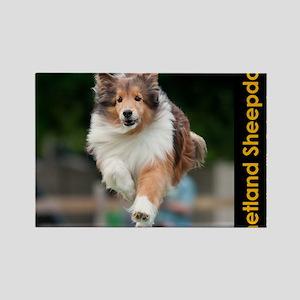 Shetland Sheepdog Agility Calenda Rectangle Magnet