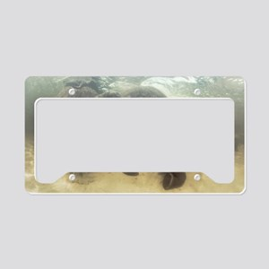 African elephants swimming License Plate Holder