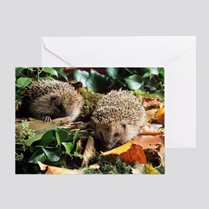 Baby hedgehogs Greeting Card