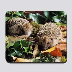 Baby hedgehogs Mousepad