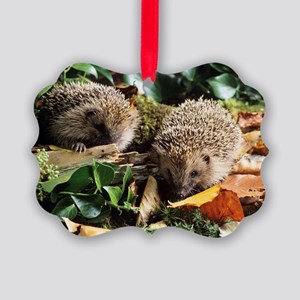 Baby hedgehogs Picture Ornament