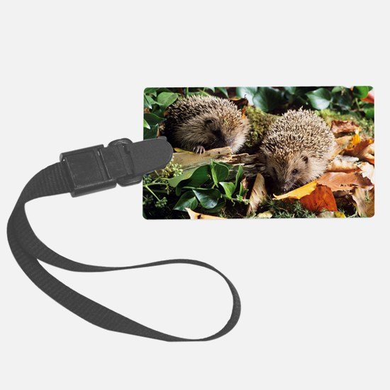 Baby hedgehogs Luggage Tag