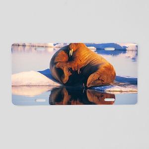 Atlantic walrus Aluminum License Plate
