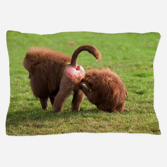 Baboons grooming Pillow Case