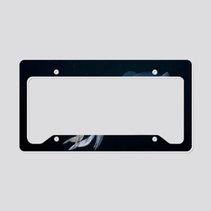 Bigfin reef squid License Plate Holder