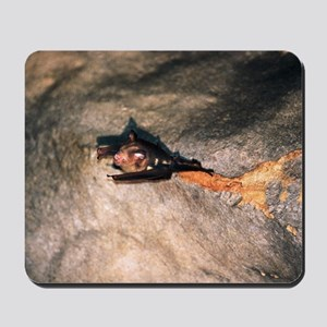 Bat on cave roof Mousepad