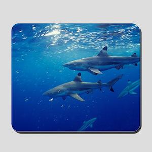 Blacktip reef sharks Mousepad