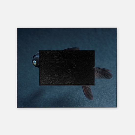 Black Moor ornamental fish Picture Frame