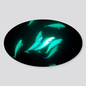 Beluga whales Sticker (Oval)