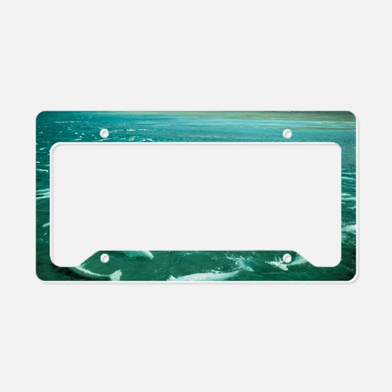 Beluga whales moulting License Plate Holder