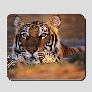 Bengal tiger (Panthera tigris) Mousepad