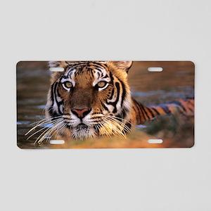 Bengal tiger (Panthera tigr Aluminum License Plate