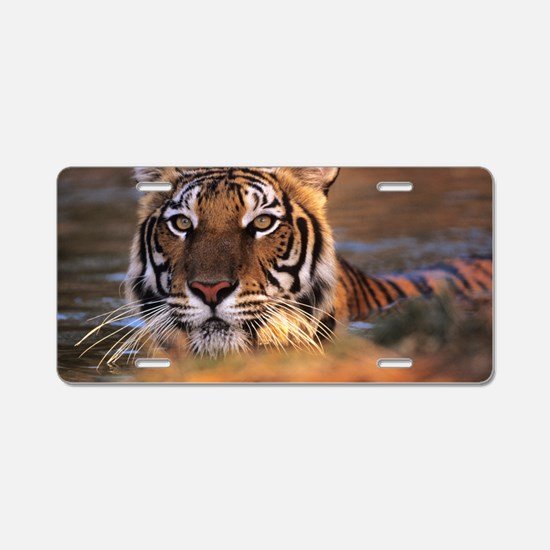Bengal tiger (Panthera tigr Aluminum License Plate