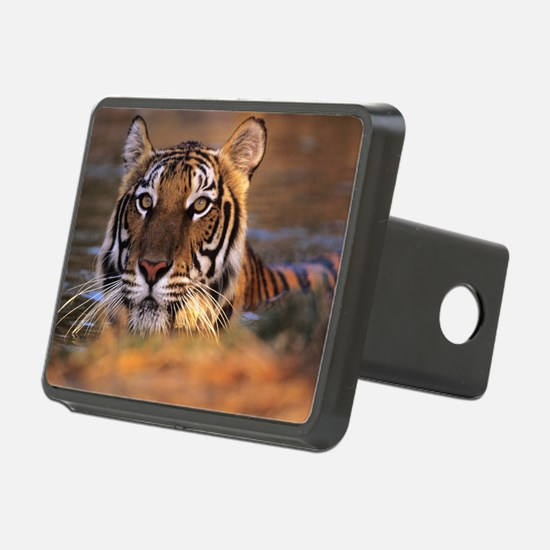 Bengal tiger (Panthera tig Hitch Cover