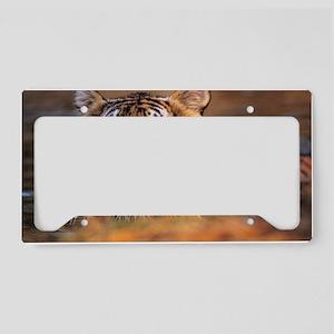 Bengal tiger (Panthera tigris License Plate Holder