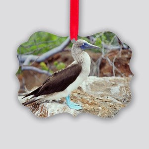 Blue-footed booby Picture Ornament