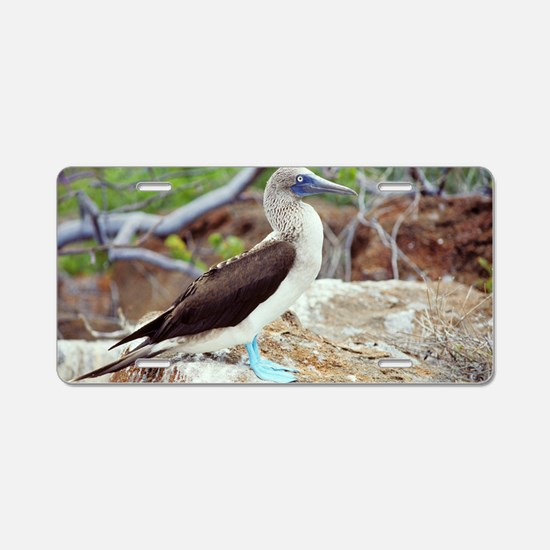 Blue-footed booby Aluminum License Plate