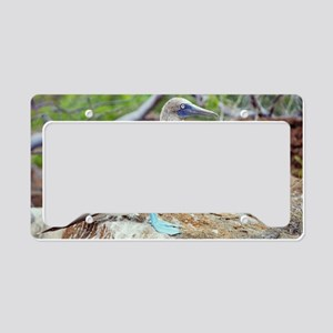 Blue-footed booby License Plate Holder