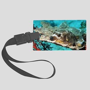 Blackspotted pufferfish Large Luggage Tag