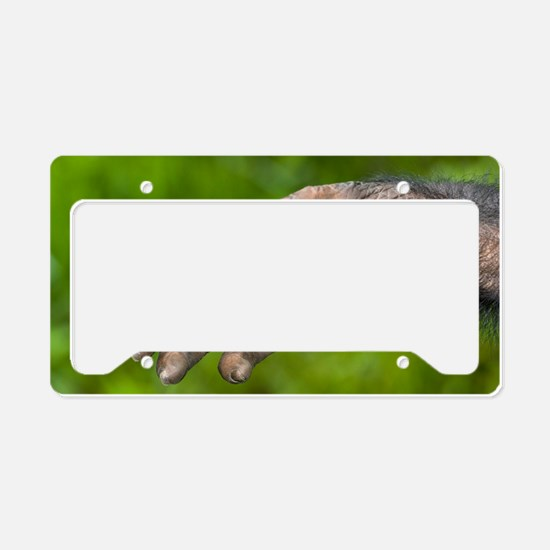 Bonobo ape hand License Plate Holder