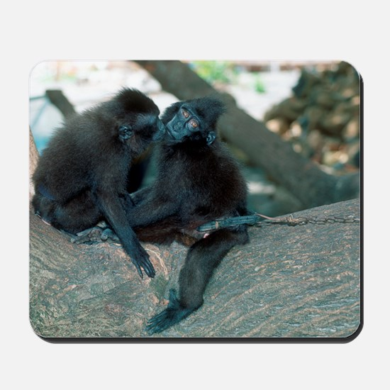 Captive crested black macaques Mousepad