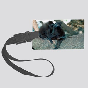 Captive crested black macaques Large Luggage Tag