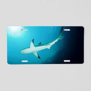 Caribbean reef shark Aluminum License Plate
