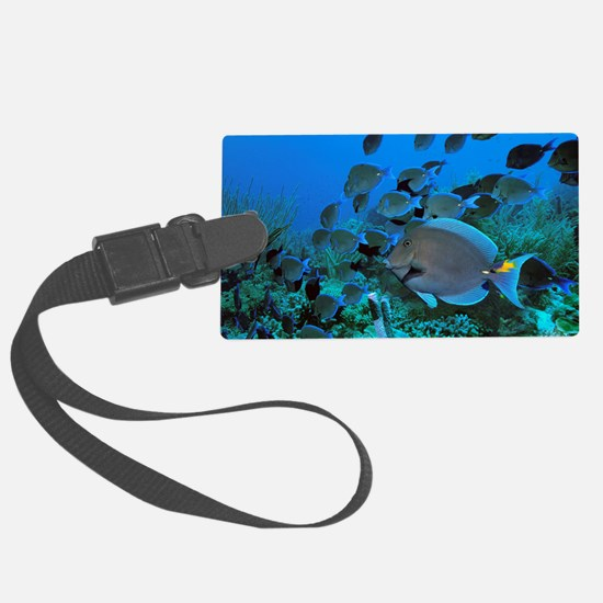 Blue tang surgeonfish Luggage Tag