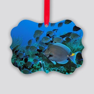 Blue tang surgeonfish Picture Ornament