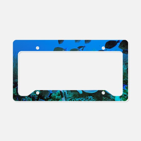 Blue tang surgeonfish License Plate Holder